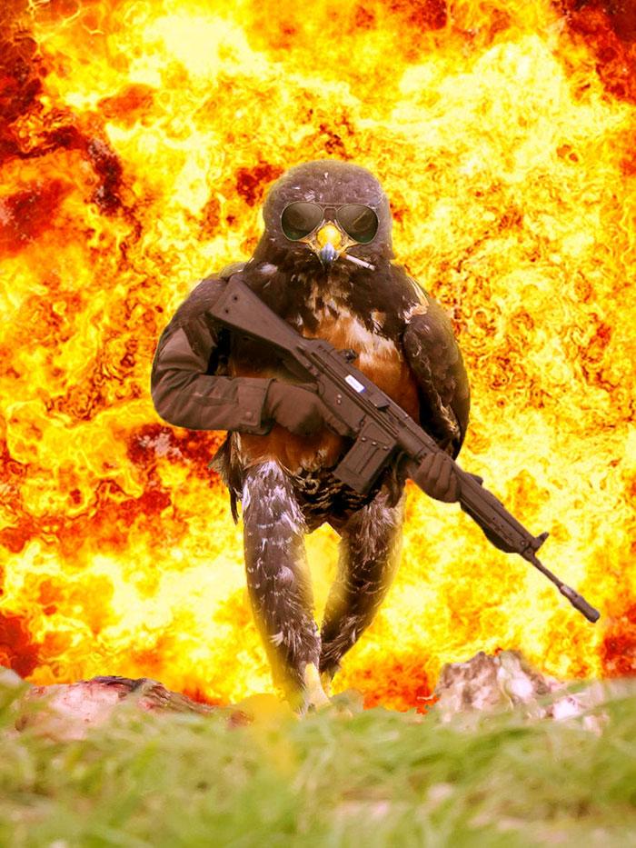 funny-badass-hawk-photoshop-battle-5