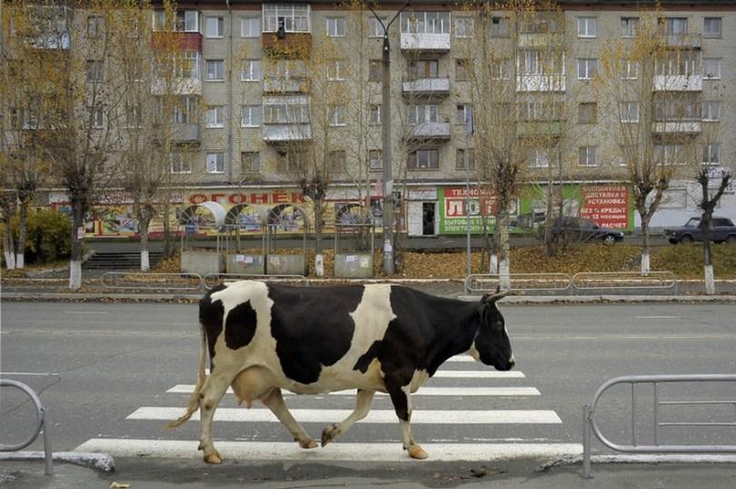 russia photos alexander petrosyan 8 - 50 fotos brutalmente honestas da Rússia mostram que não há outro país como ele