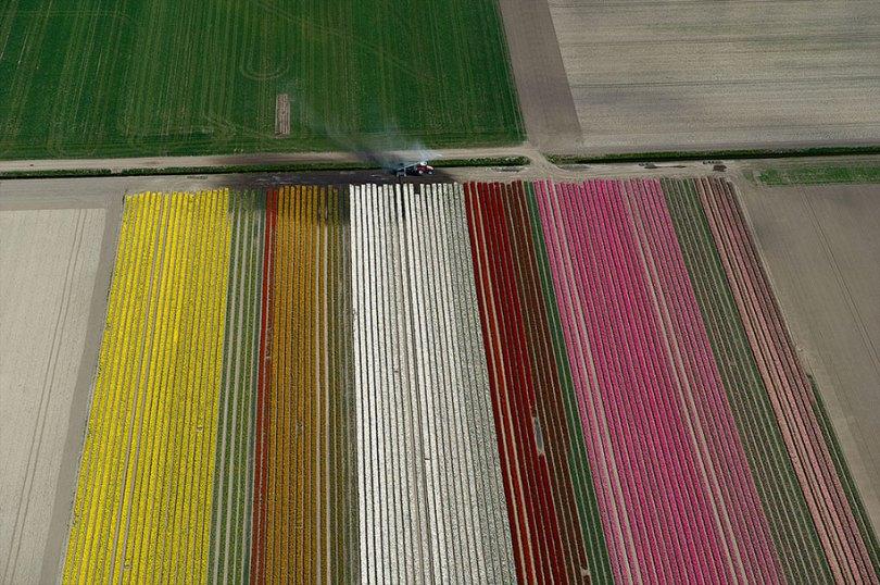 flower fields aerial photography netherlands normann szkop 30 - Show de cores nas fotos aéreas de tulipas holandesas