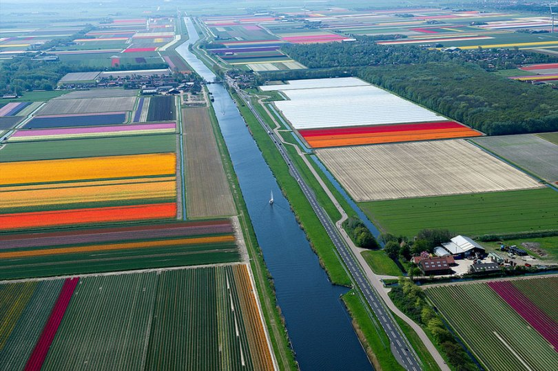 flower fields aerial photography netherlands normann szkop 55 - Show de cores nas fotos aéreas de tulipas holandesas