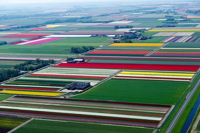 flower fields aerial photography netherlands normann szkop 57 - Show de cores nas fotos aéreas de tulipas holandesas