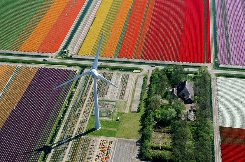 flower fields aerial photography netherlands normann szkop 8 - Show de cores nas fotos aéreas de tulipas holandesas
