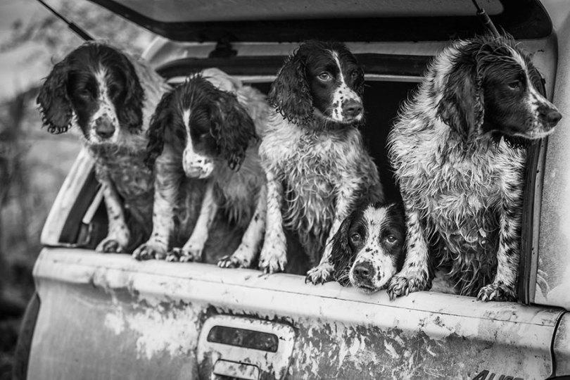 kennel club dog photographer competition 2017 10 - Ganhadores do concurso fotografias de cachorrinhos