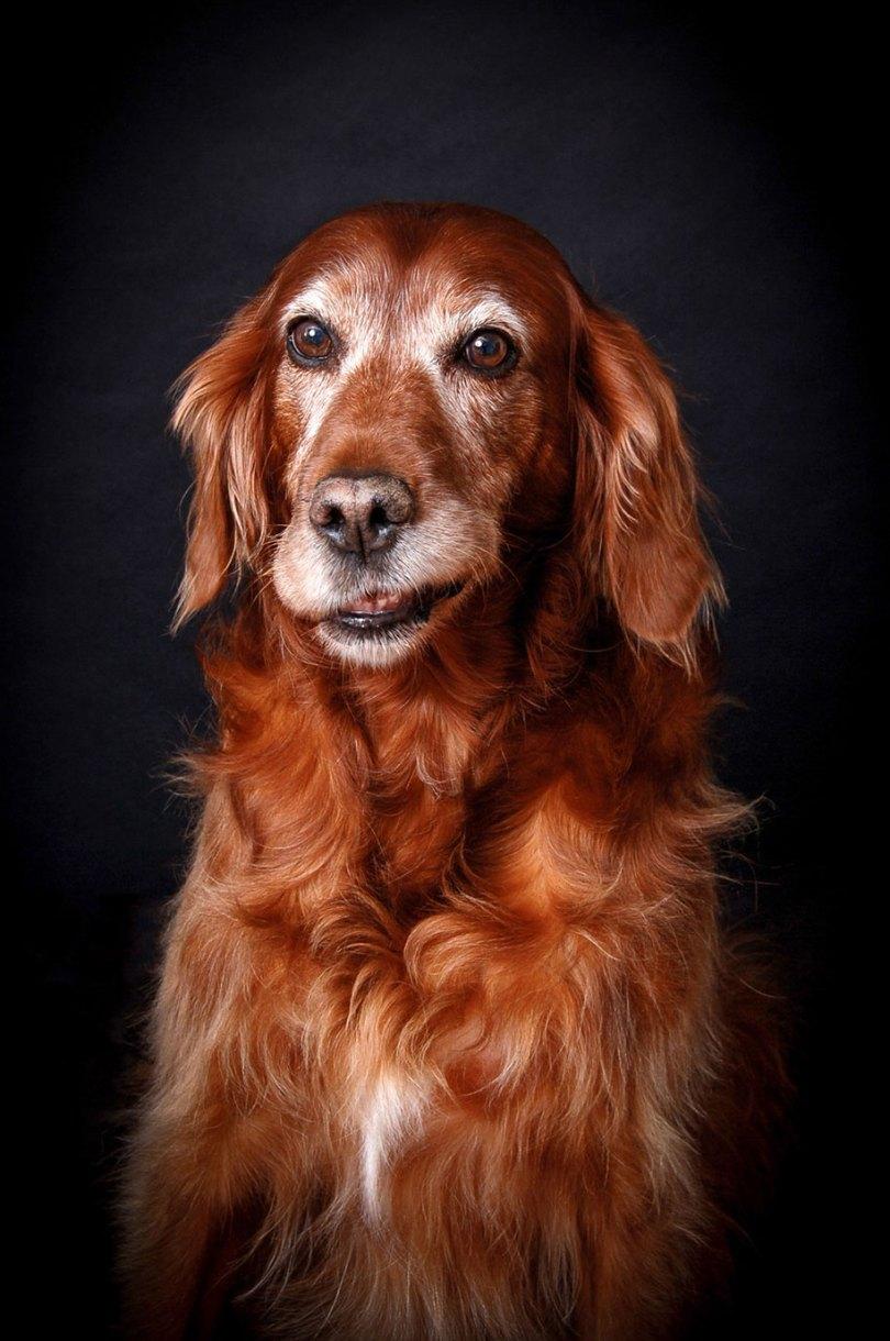 kennel club dog photographer competition 2017 15 - Ganhadores do concurso fotografias de cachorrinhos