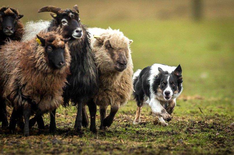 kennel club dog photographer competition 2017 18 - Ganhadores do concurso fotografias de cachorrinhos