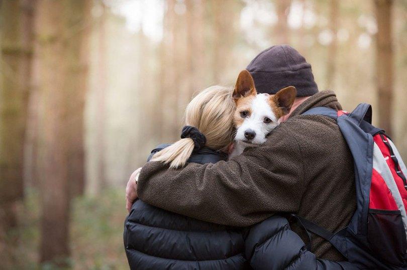 kennel club dog photographer competition 2017 21 - Ganhadores do concurso fotografias de cachorrinhos