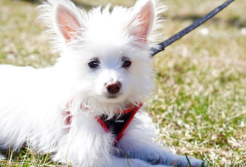 kennel club dog photographer competition 2017 30 - Ganhadores do concurso fotografias de cachorrinhos
