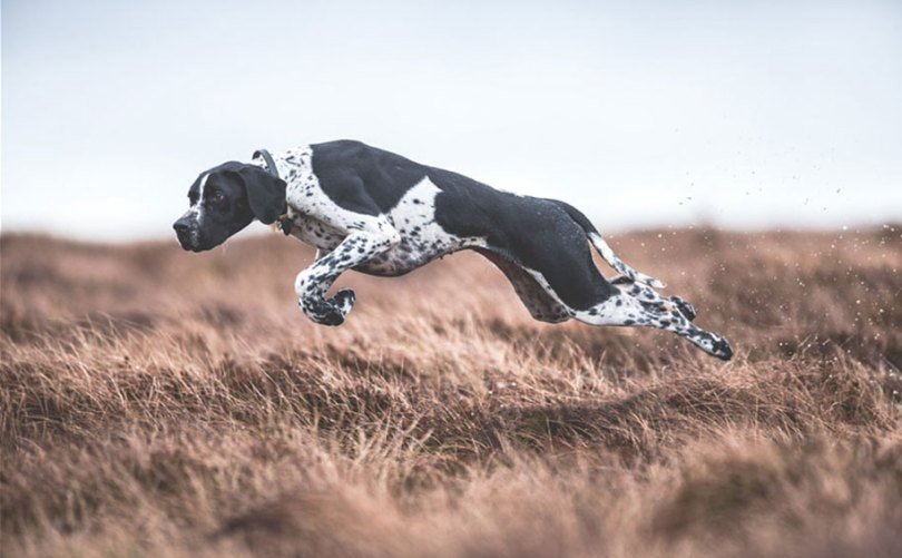kennel club dog photographer competition 2017 9 - Ganhadores do concurso fotografias de cachorrinhos