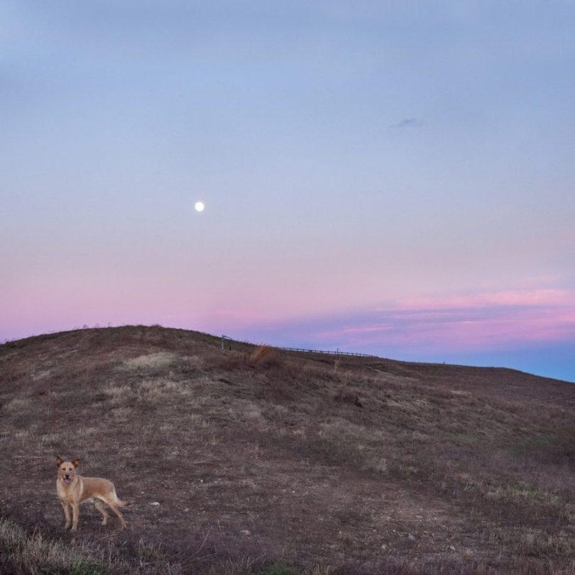 11 2 915x915 - Fotógrafa tira fotos de cães abandonados em abrigo