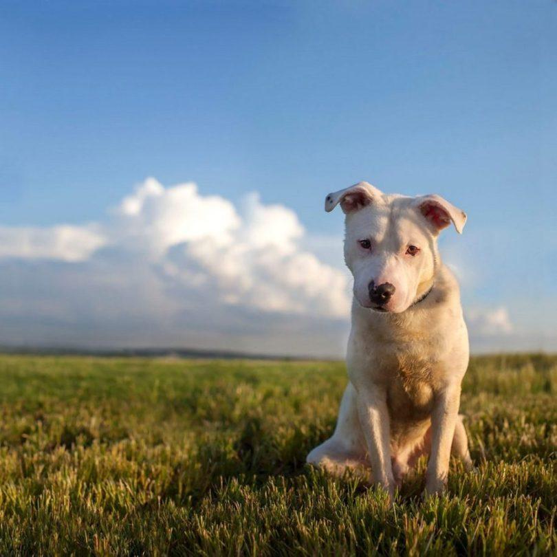 12 2 915x915 - Fotógrafa tira fotos de cães abandonados em abrigo