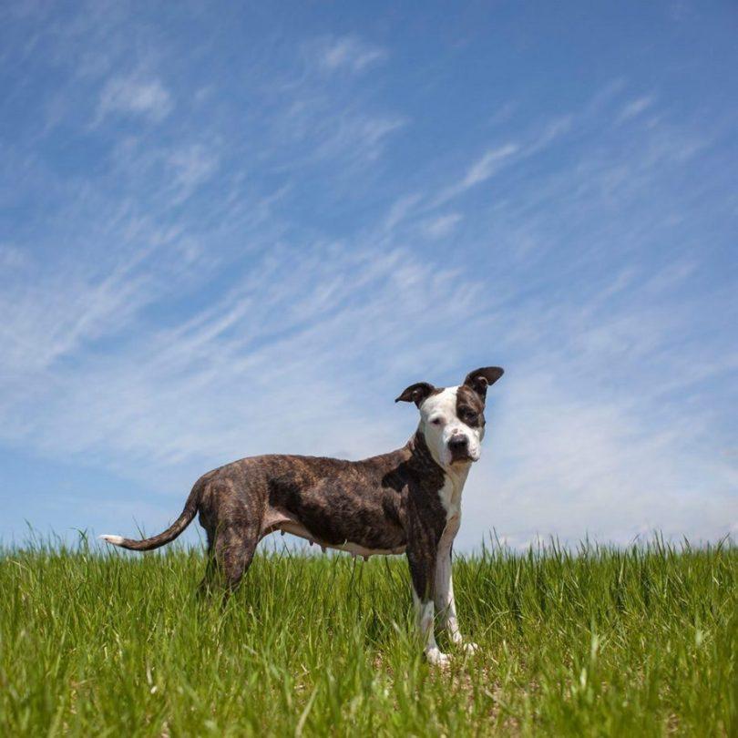13 2 915x915 - Fotógrafa tira fotos de cães abandonados em abrigo