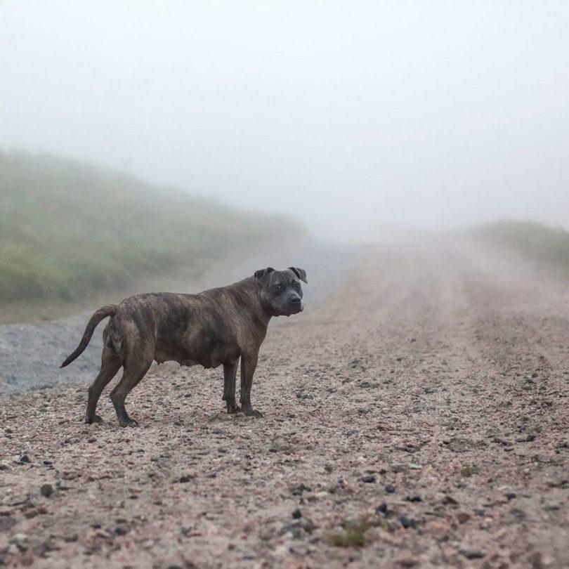 Fotos, Curiosidades, Comunicação, Jornalismo, Marketing, Propaganda, Mídia Interessante 16-1-915x915 Fotógrafa tira fotos de cães abandonados em abrigo Cotidiano Fotos e fatos  cães abandonados