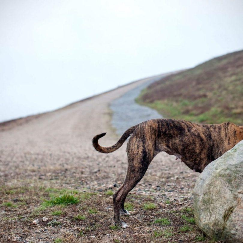 20 915x915 - Fotógrafa tira fotos de cães abandonados em abrigo