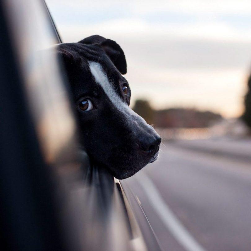 4 2 915x915 - Fotógrafa tira fotos de cães abandonados em abrigo