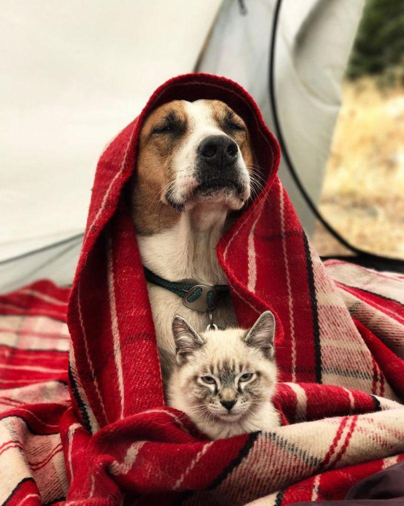 5a1bc7a8abd76 9 5a1845ef826d0  880 - Como cão e gato - Esses amigos são inseparáveis