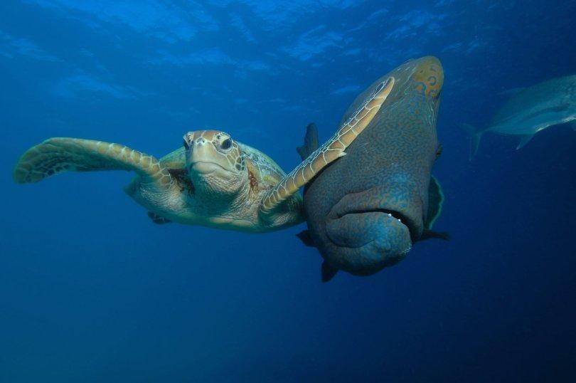 00000216 p - As fotografias profissionais mais engraçadas do mundo animal
