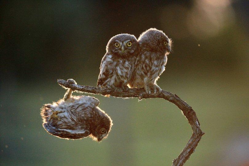 00000228 p - As fotografias profissionais mais engraçadas do mundo animal