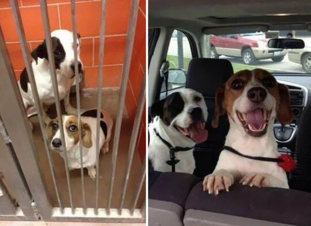 5a9682bc7fc4c-happy-dogs-before-after-adoption-15-5a95370e3b911__880 50+ Photos Show Dogs Before & After Their Adoption, And It's Hard To Believe They Are The Same Dogs Random
