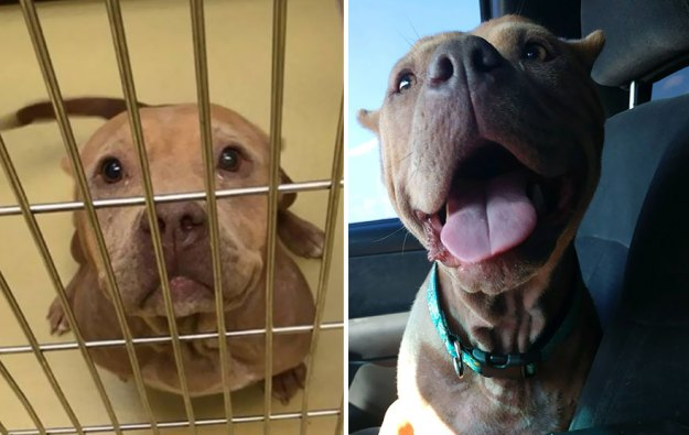5a9682be96864-happy-dogs-before-after-adoption-14-5a95364c45fb7__880 50+ Photos Show Dogs Before & After Their Adoption, And It's Hard To Believe They Are The Same Dogs Random
