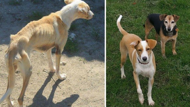 5a9682c3ec855-happy-dogs-before-after-adoption-48-5a953a06b6f2d__880 50+ Photos Show Dogs Before & After Their Adoption, And It's Hard To Believe They Are The Same Dogs Random