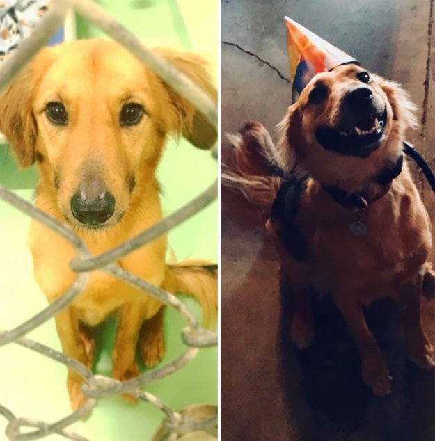 5a9682c77fc0a-happy-dogs-before-after-adoption-4-5a953688e4792__880 50+ Photos Show Dogs Before & After Their Adoption, And It's Hard To Believe They Are The Same Dogs Random