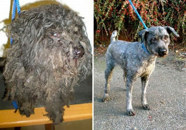 5a9682c9c9abd-happy-dogs-before-after-adoption-88-5a954990bb82f__880 50+ Photos Show Dogs Before & After Their Adoption, And It's Hard To Believe They Are The Same Dogs Random