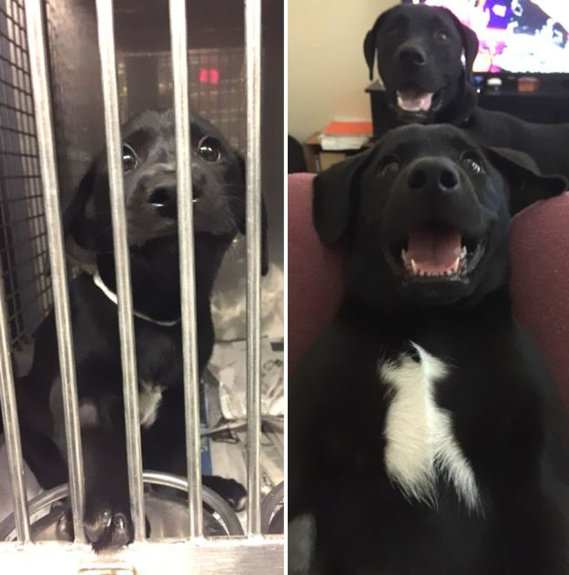 5a9682cb538d1-happy-dogs-before-after-adoption-9-5a9538d7693c8__880 50+ Photos Show Dogs Before & After Their Adoption, And It's Hard To Believe They Are The Same Dogs Random