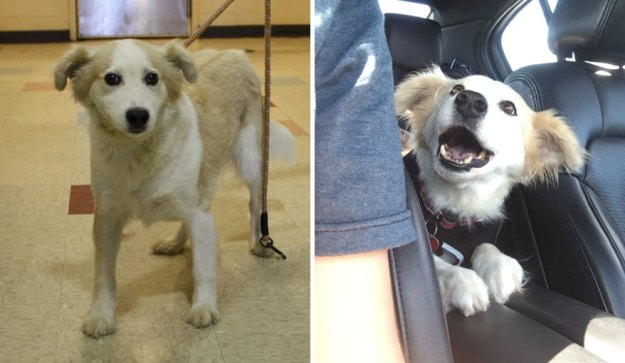 5a9682cc66aae-happy-dogs-before-after-adoption-49-5a9529cfa7880__880 50+ Photos Show Dogs Before & After Their Adoption, And It's Hard To Believe They Are The Same Dogs Random