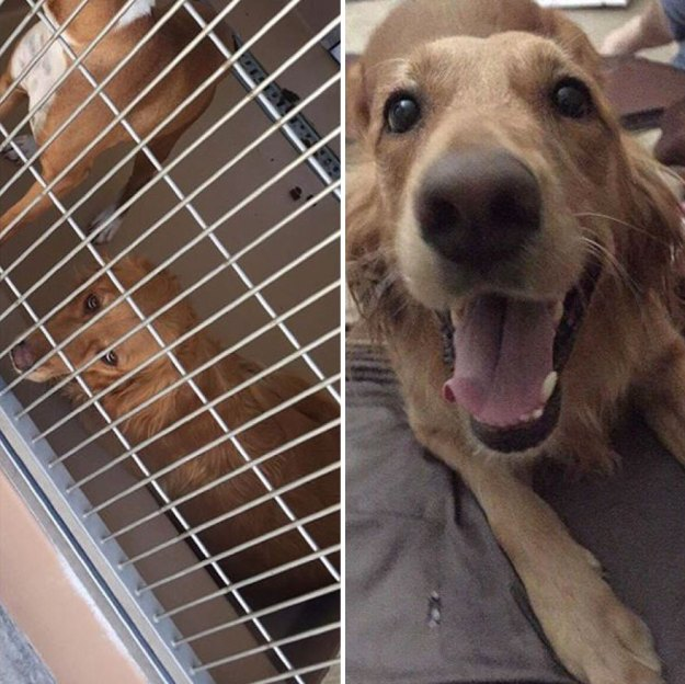 5a9682d089242-happy-dogs-before-after-adoption-35-5a9517463df04__880 50+ Photos Show Dogs Before & After Their Adoption, And It's Hard To Believe They Are The Same Dogs Random