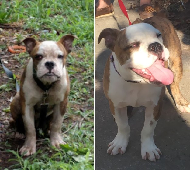 5a9682d1651aa-happy-dogs-before-after-adoption-18-5a95382994c85__880 50+ Photos Show Dogs Before & After Their Adoption, And It's Hard To Believe They Are The Same Dogs Random