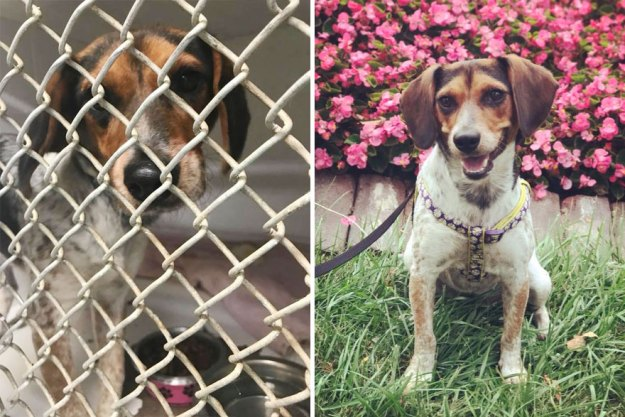 5a9682d365c0e-happy-dogs-before-after-adoption-66-5a9527f49b859__880 50+ Photos Show Dogs Before & After Their Adoption, And It's Hard To Believe They Are The Same Dogs Random