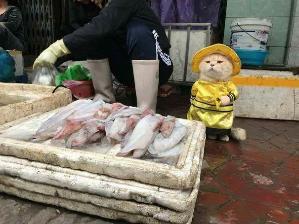 5a9fb619b78db-1-5a9e56520977d__605 Kitten Selling Fish In Vietnam Becomes The Latest Internet Sensation Random