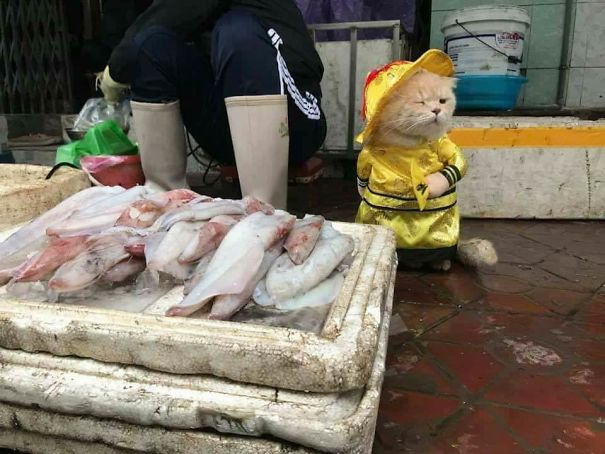 5a9fb61b18fa1-2-5a9e567acd178__605 Kitten Selling Fish In Vietnam Becomes The Latest Internet Sensation Random