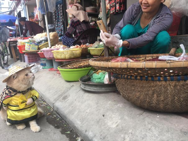 5a9fb61b64ca6-11-5a9e518dd0062__605 Kitten Selling Fish In Vietnam Becomes The Latest Internet Sensation Random