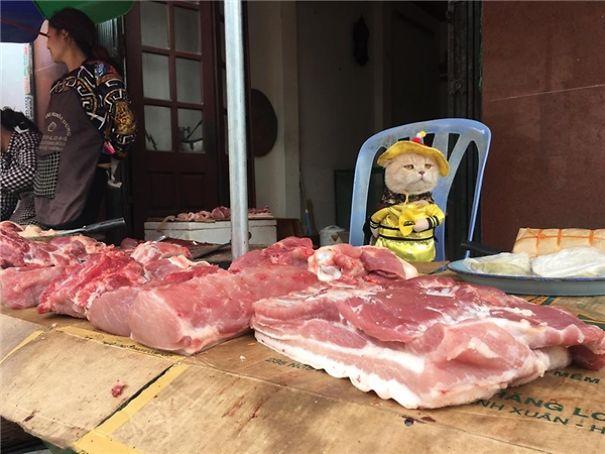 5a9fb61c13f48-20170413-041045-4_600x450-5a9e522267ebf__605 Kitten Selling Fish In Vietnam Becomes The Latest Internet Sensation Random