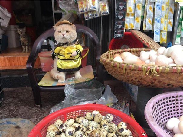 5a9fb61cb9fcd-20170413-041052-6_600x450-5a9e522a4fca6__605 Kitten Selling Fish In Vietnam Becomes The Latest Internet Sensation Random