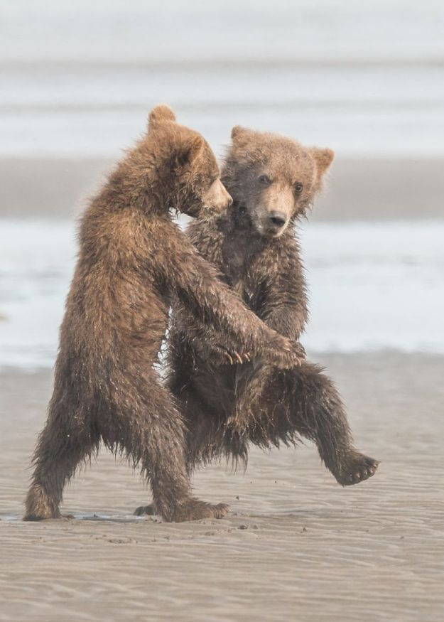 5b9f5bfbb293b-comedy-wildlife-photography-awards-finalists-2018-26-5b9b57850f4fd__880 20+ Comedy Wildlife Photography Awards 2018 Finalists That Will Brighten Your Day Photography Random