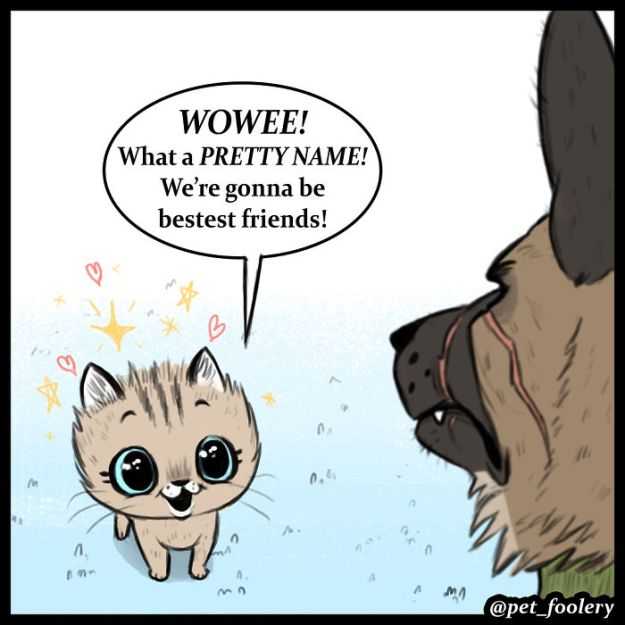 5bbb6f8da68df-funny-animal-comics-adventures-dogs-pixie-brutus-pet-foolery-4-5bb204748a32b__700 Adorable Comics About An Old Military Dog And A Little Kitten That Will Warm Your Heart Random