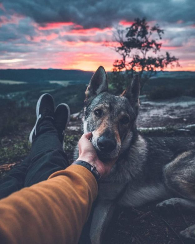 5bc58f436bc08-Bkz9_lGn-SA-png__700 20+ Pictures Of A Guy Petting His Dog For Those Tired Of #FollowMeTo Instagram Pics Photography Random