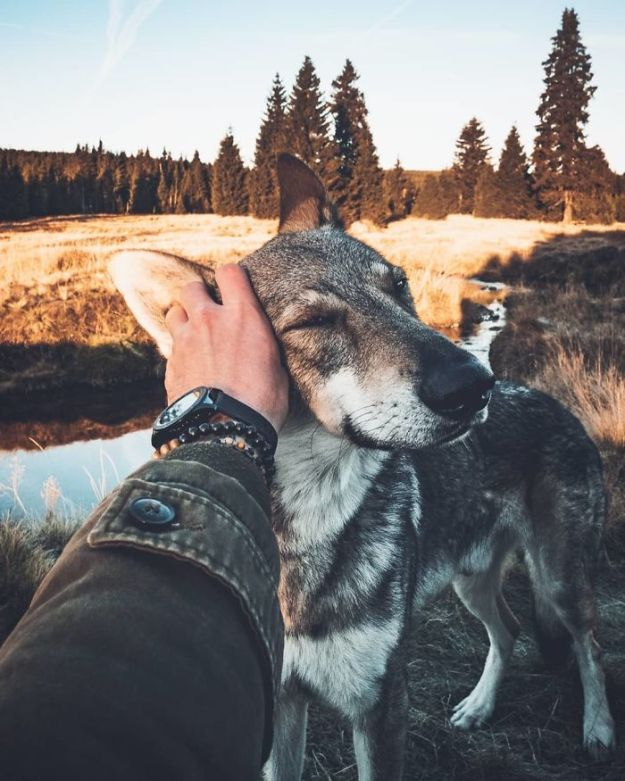 5bc58f44009da-BoWt5d1n9FX-png__700 20+ Pictures Of A Guy Petting His Dog For Those Tired Of #FollowMeTo Instagram Pics Photography Random