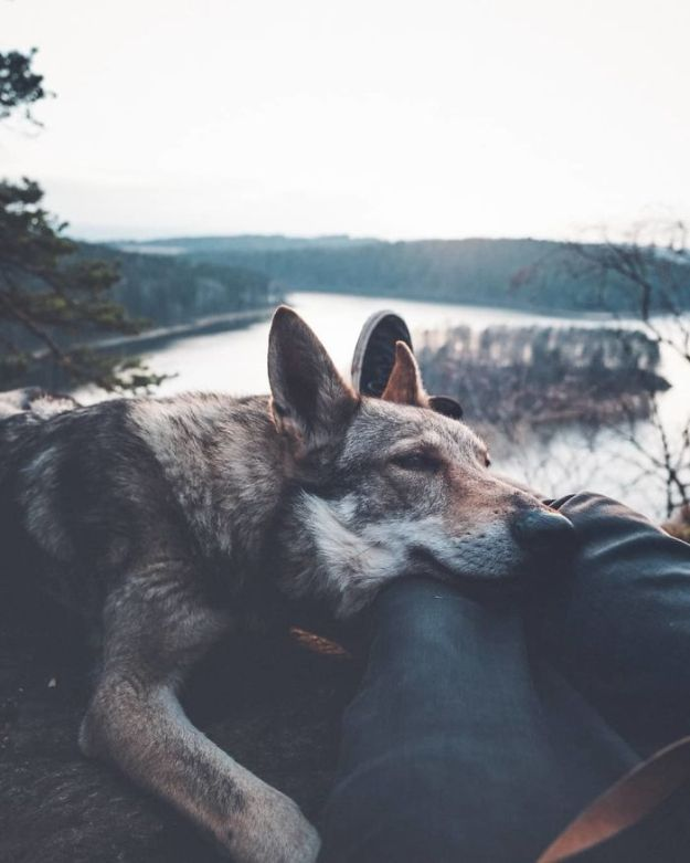 5bc58f4425e3e-BhJCPjinXfR-png__700 20+ Pictures Of A Guy Petting His Dog For Those Tired Of #FollowMeTo Instagram Pics Photography Random