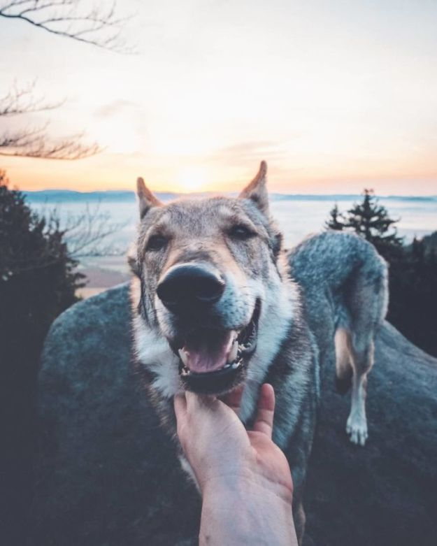 5bc58f466b136-BhmFvAxn5V4-png__700 20+ Pictures Of A Guy Petting His Dog For Those Tired Of #FollowMeTo Instagram Pics Photography Random