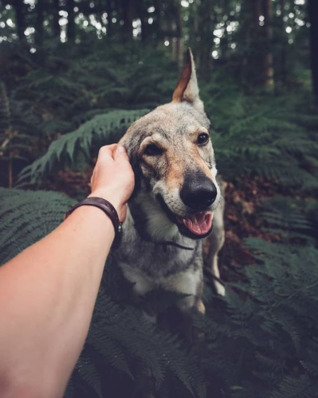 5bc58f46a92f4-Bj9TqmRHq6N-png__700 20+ Pictures Of A Guy Petting His Dog For Those Tired Of #FollowMeTo Instagram Pics Photography Random