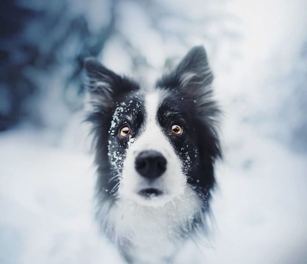 5c07def0d05cf-BfWI8UuA5JD-png__880 50 Beautiful Photos Of Dogs Taken By Czech Photographer Kristýna Kvapilová Photography Random