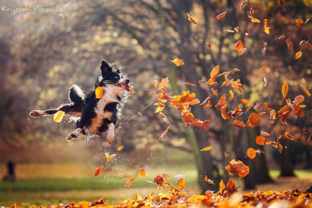 5c07def0eea7a-Mountain-crew-adventures-of-two-girls-and-four-dogs-5c00fd4a48b88__880 50 Beautiful Photos Of Dogs Taken By Czech Photographer Kristýna Kvapilová Photography Random