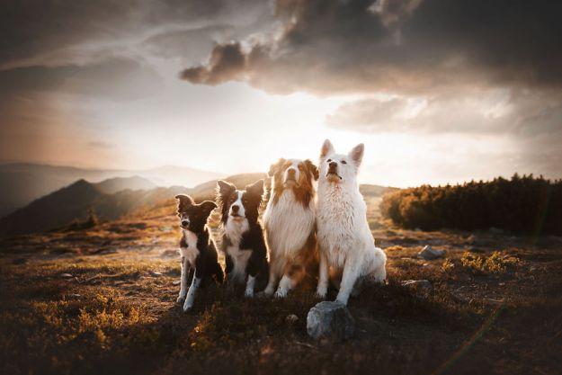 5c07def13c2b1-Mountain-crew-5bfc530cc4aff__880 50 Beautiful Photos Of Dogs Taken By Czech Photographer Kristýna Kvapilová Photography Random