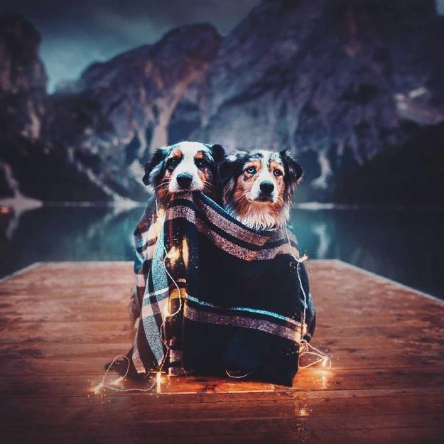 5c07def1bbcd5-BoOGyomhDuy-png__880 50 Beautiful Photos Of Dogs Taken By Czech Photographer Kristýna Kvapilová Photography Random
