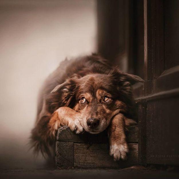5c07def24bd7d-BlxFADQBEK4-png__880 50 Beautiful Photos Of Dogs Taken By Czech Photographer Kristýna Kvapilová Photography Random