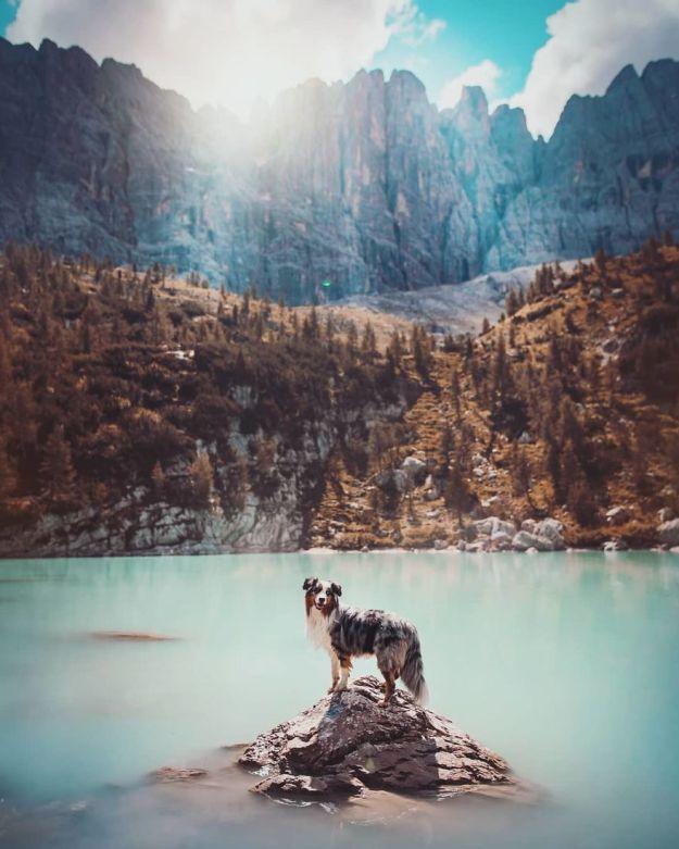 5c07def2c88ec-Bm2t9x3hFlz-png__880 50 Beautiful Photos Of Dogs Taken By Czech Photographer Kristýna Kvapilová Photography Random