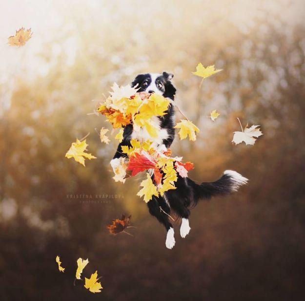 5c07def334133-BbNAsZtHeR--png__880 50 Beautiful Photos Of Dogs Taken By Czech Photographer Kristýna Kvapilová Photography Random